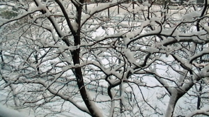 WINTER (640x360)